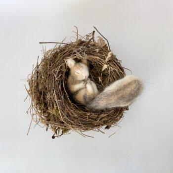 formlaut gefilztes Eichhörnchen im Nest